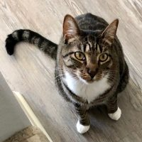 Perfect Cat
